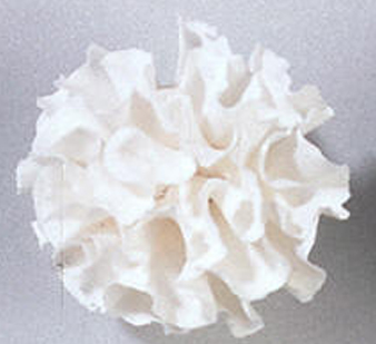 Gumpaste Hand Made Carnation   8 Per Package