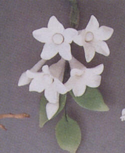 Gumpaste Hand Made Asian Stephanotis Filler 2 Per Package